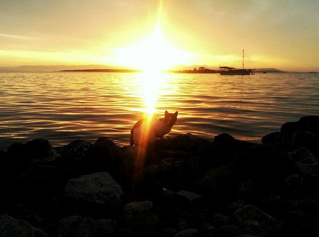 Sunset Sunset_collection Sunset #sun #clouds #skylovers #sky #nature #beautifulinnature #naturalbeauty Photography Landscape [a:877536] Sunset_madness EyeEm Best Shots - Sunsets + Sunrise Getting Inspired