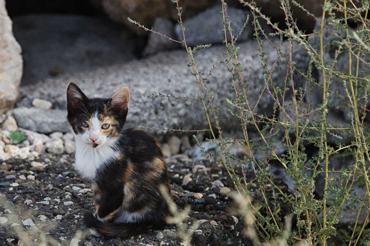 Street Cats Animal Themes Boulder Cats Close-up Coastline Day Domestic Animals Domestic Cat Feline Feline Portraits Mammal Mersin Turkey No People One Animal Outdoors Pets Portrait Rock Formation Street Cats