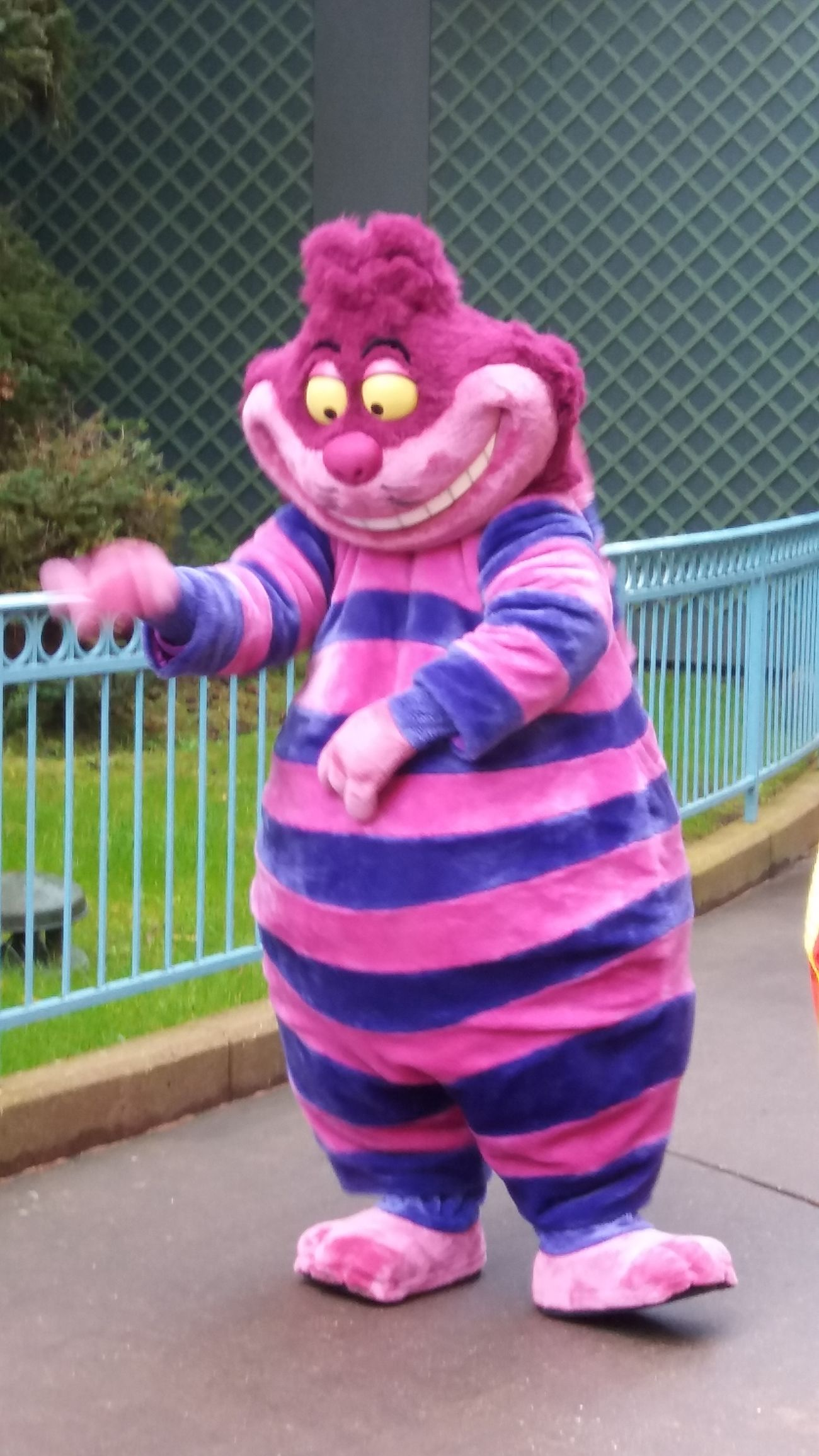 Pink Color Multi Colored Outdoors Day Disneyland Paris Cat Cheshire