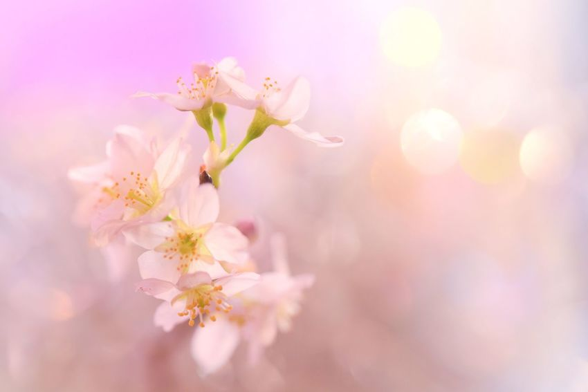 Flower Close-up Nature Tree Growth Fragility Twig Blossom Beauty In Nature Petal Freshness No People Outdoors Day Flower Head