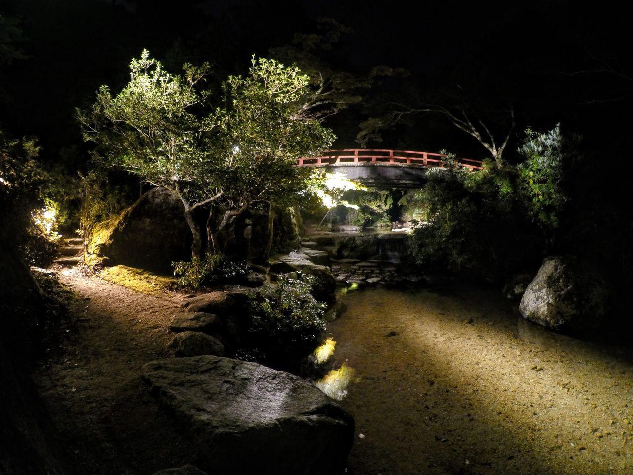 Atmospheric Scene Beauty In Nature Hiroshima,japan Illuminated Trees Miyajima Island Nature Night No People Outdoors Plants Red Bridge Rocks Traditional Japanese Garden Tranquil Garden Tree