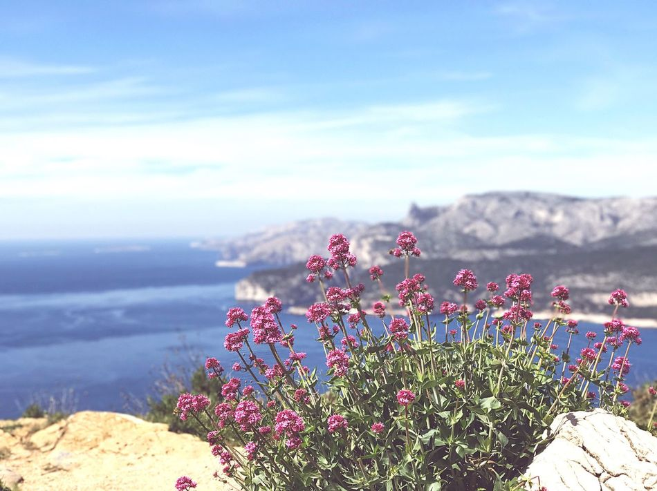 Cassis, Côte D'Azur Cassis France Southern Nature Flower No People Landscape Scenics Mountain Sea Clear Sky Travel Tourism Travel Photography Daytime Sunny calanques