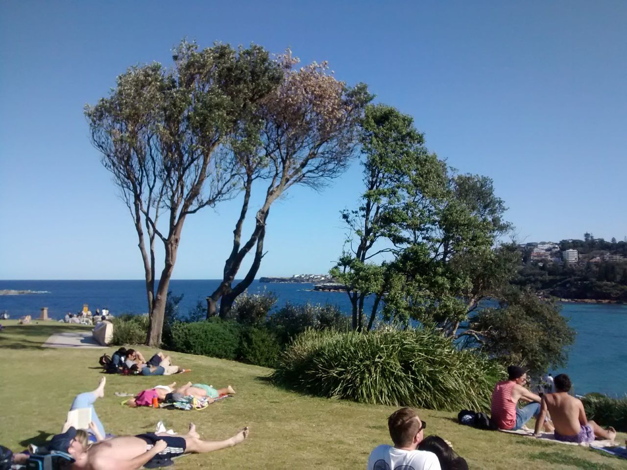Adult Beach Child Clear Sky Cliff Day Group Of People Landscape Leisure Activity Men Nature Outdoors People Sea Sky Sunbathing Sydney, Australia Togetherness Tree Tree Vacations Water Women