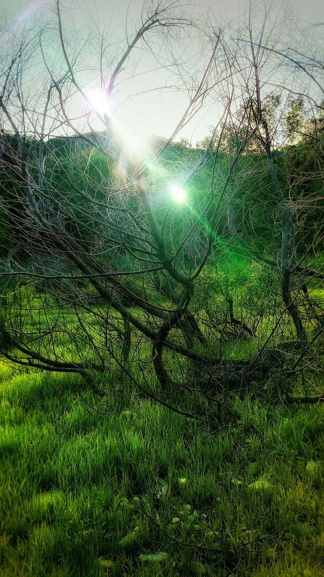The Light Of Life. Eyeemphotography EyeEmBestEdits AndroidPhotography GalaxyS5 Eye4photography  Nature_perfection Naturelovers Woods Lens Flare Lensflare Of Sun Lensflarelove Lensflares Green Green Green!  Green EyeEm Nature Lover EyeEm Best Edits Fantasy Edits Fantasy Photography Fantasy World