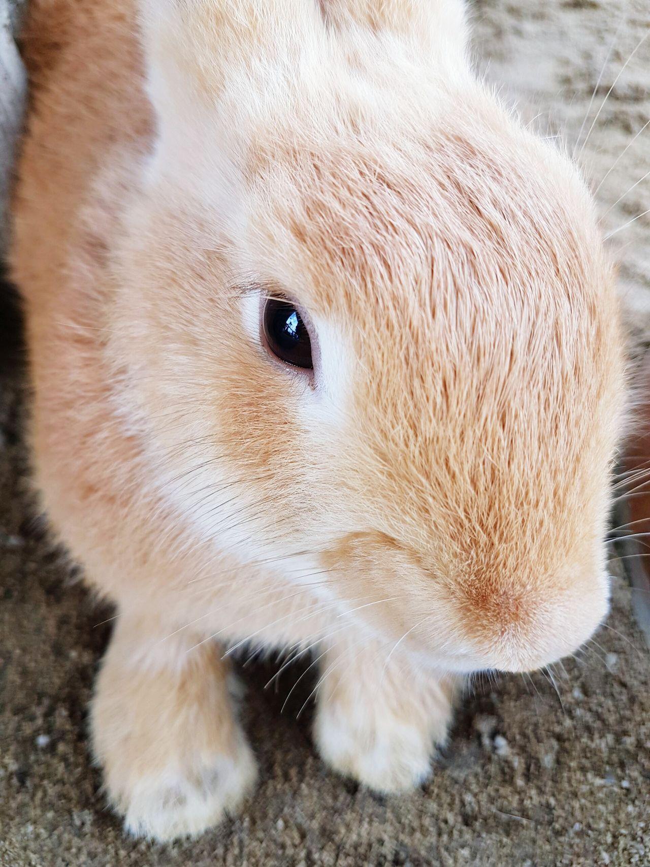 One Animal Animal Themes Close-up Animal Head  Pets Outdoors Rabbit Rabbits Rabbit ❤️ Rabbits 🐇 Rabbit 🐇 Rabbitsofinstagram Rabbit - Animal Rabbit♡ Rabbit Face Rabbit Portrait Rabbitstagram Rabbit Eye Rabbit Faces