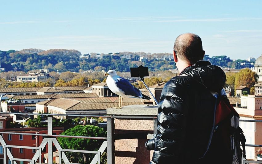 The Tourist The Tourist Mission Travel Photography Rome Italy Seagull Tourist Attraction  Followme Likeforlike Capture The Moment City View  Palatine Hill Taking Photos Of People Taking Photos Birds Of EyeEm  Cityscapes Traveling Travel Travelphotography Tourist Tourists