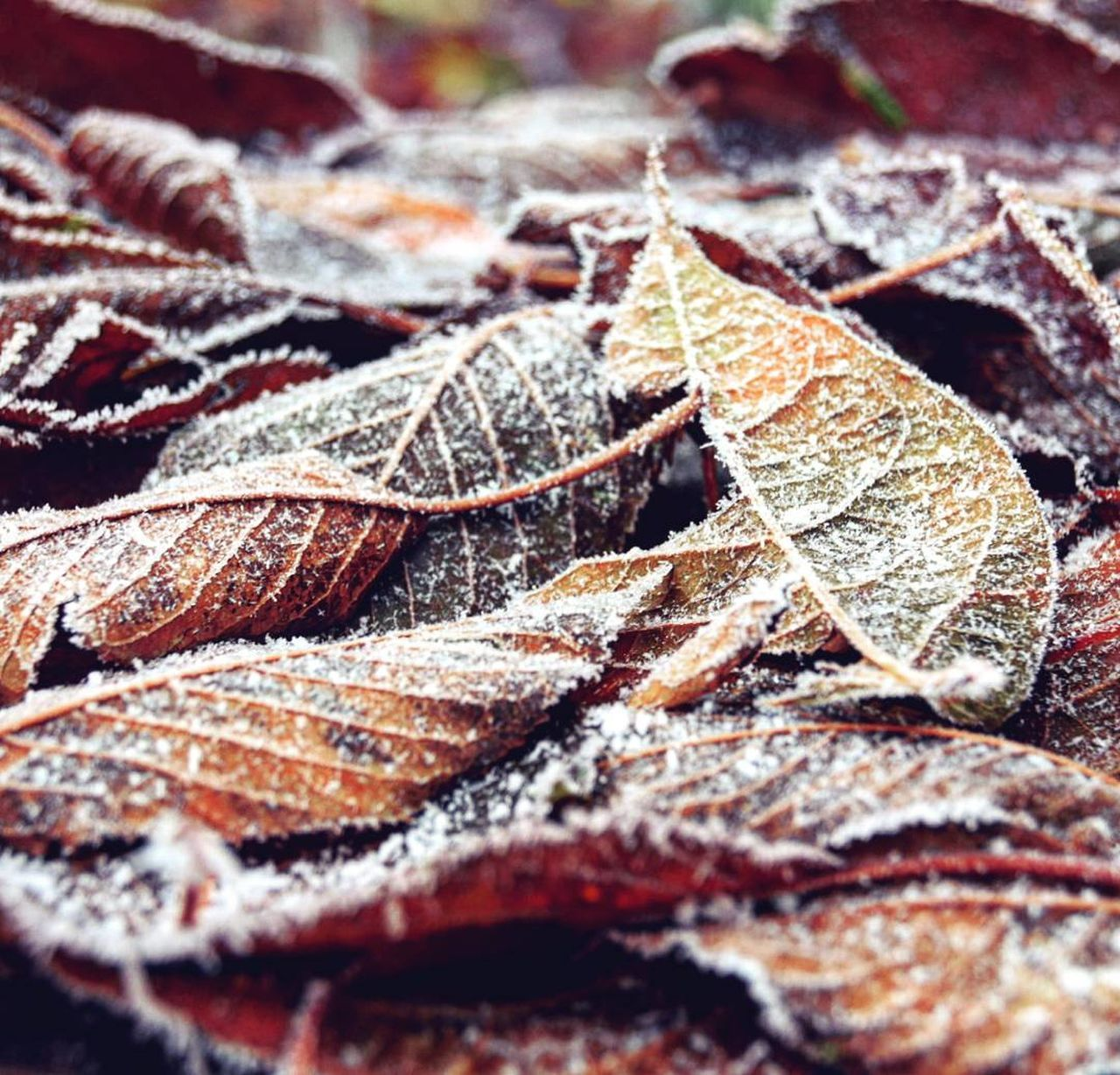 Leafes Beauty In Nature Winter Nature Day Outdoors Itscold Garden