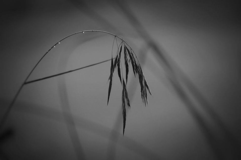 Alright, so I couldn't decide wether to post the color one or the black & white one. 🙄 So I post both 🤓 And for some reason the Auto Tag function keeps suggesting my location is Simo Finland ☝🏼️😐 Mysterious.. B&w Beauty In Nature Blackandwhite Close-up Day EyeEm Nature Lover Focus On Foreground Grass Growth Nature Nature_collection No People Outdoors P510 Plant Selective Focus Shootermag Showcase July Sky Tadaa Community Tadaa Friends Tranquil Scene Tranquility Twig Vignette Welcome To Black