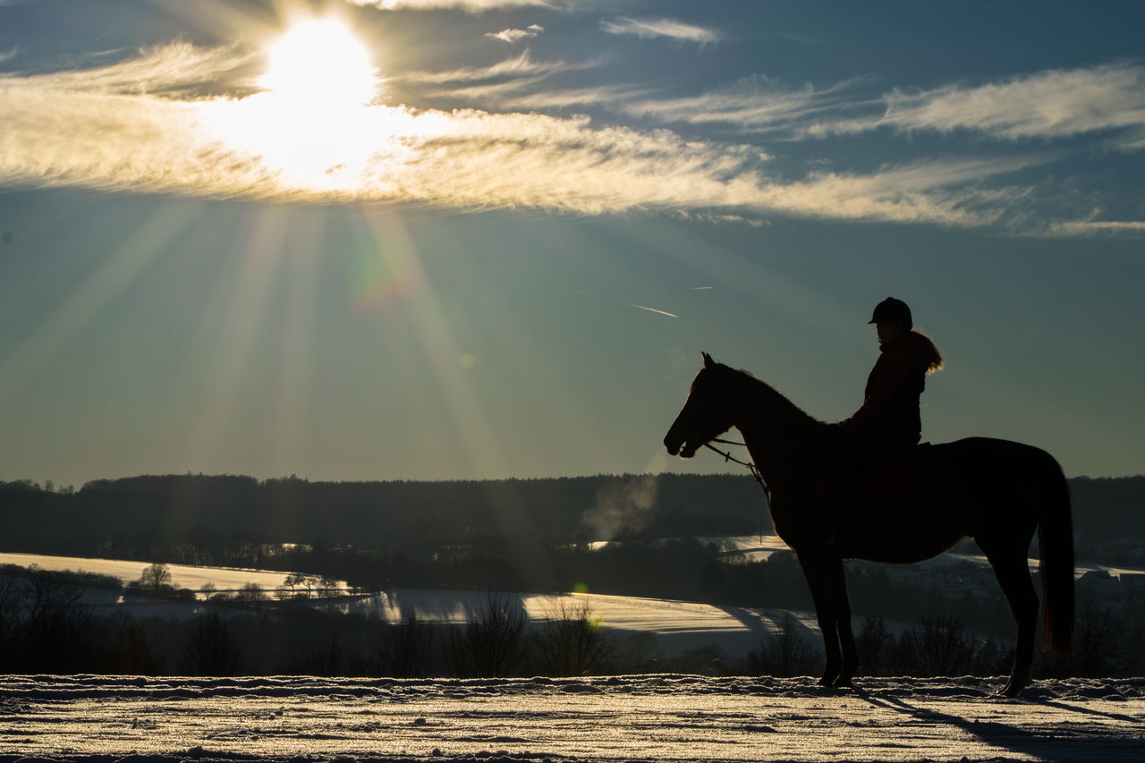Backlight Horse Horseback Riding Mammal Nature One Animal One Person Outdoors Riding Silhouette Sky Sun Sunlight Sunset Winter Winter Wonderland Young Adult