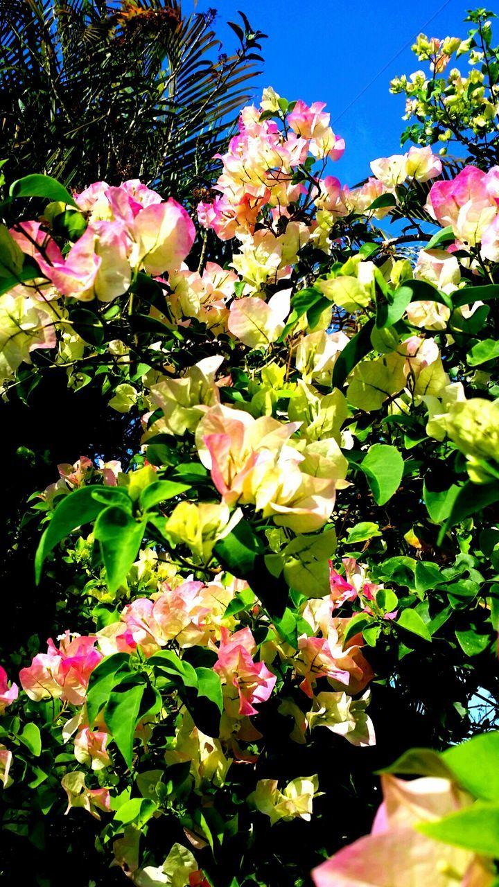 Flowers Blooming In Park