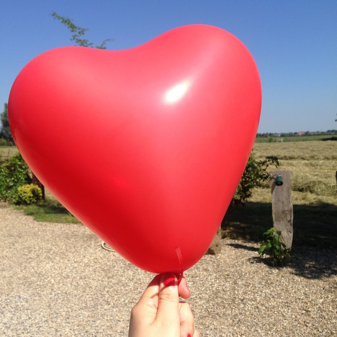 red ballon, wedding Animal Themes Balloon Balloons Close-up Day Happy Heart Heart Shape Holding Human Body Part Human Hand Human Leg Leisure Activity Lifestyles Low Section Nature One Person Outdoors Real People Red Sky Tree Wedding Wedding Day Wedding Photography