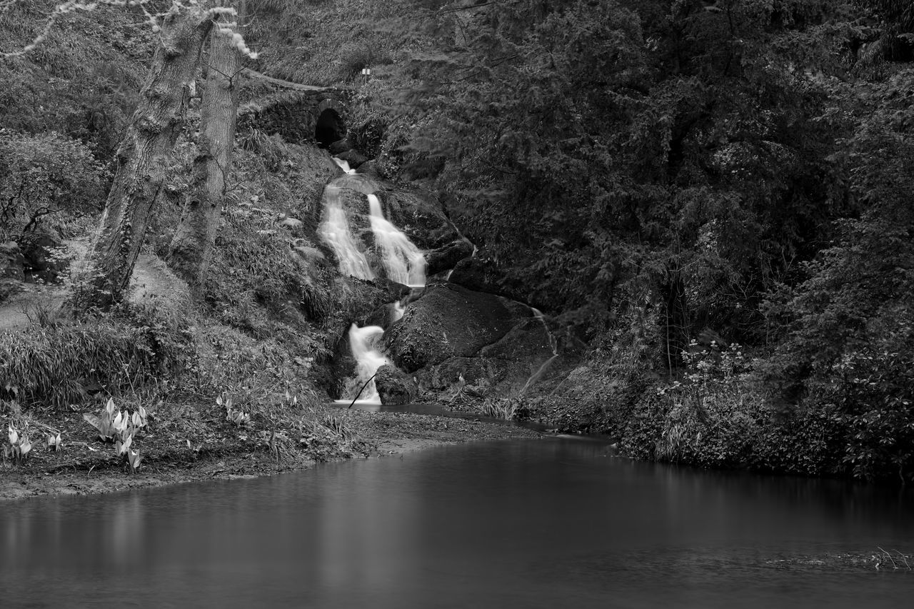 Beauty In Nature Blackandwhite Check This Out Day Eye4photography  EyeEm Best Shots EyeEm Gallery EyeEm Nature Lover Forest Idyllic Lake Landscape Long Exposure Monochrome Nature Nature_collection No People Non-urban Scene Outdoors Scenics Taking Photos Tranquil Scene Tranquility Water Waterfall