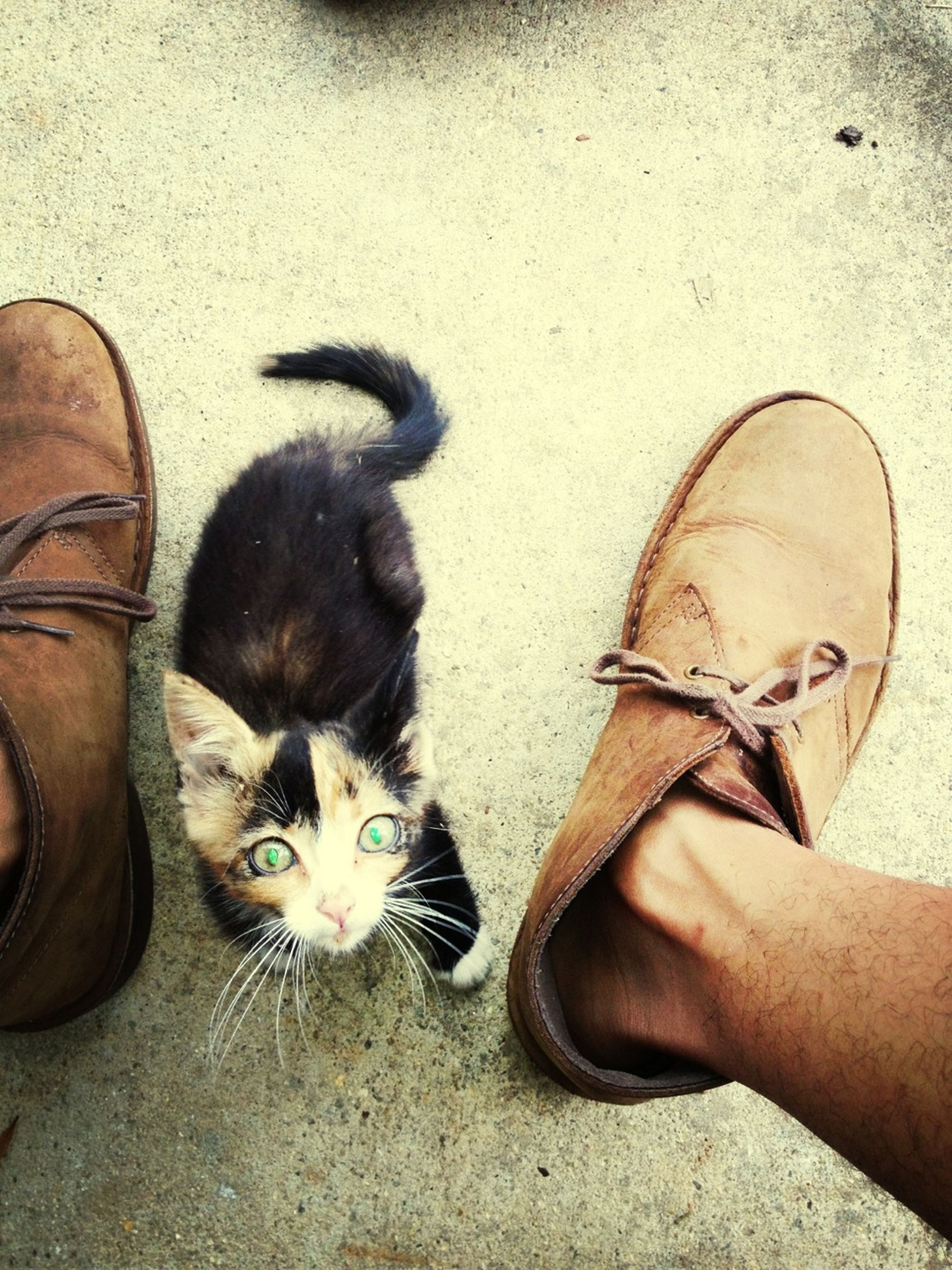 person, personal perspective, lifestyles, low section, part of, high angle view, unrecognizable person, animal themes, leisure activity, pets, street, domestic animals, one animal, shoe, men, holding