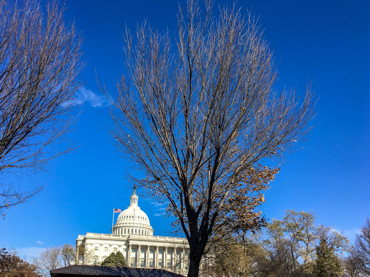 Architecture Blue Building Exterior Capitol Hill City Cityscape Clear Sky Day Democracy Dome Donald Trump Inauguration  No People Outdoors Sky Travel Destinations Tree