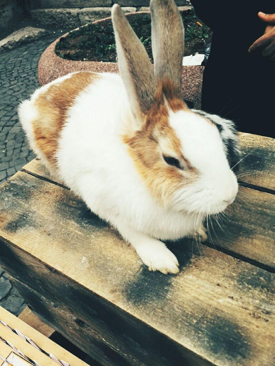 Rabbits 🐇 Lovely Lucky Dilek Sans Beautiful My Beautiful City Beautiful Day