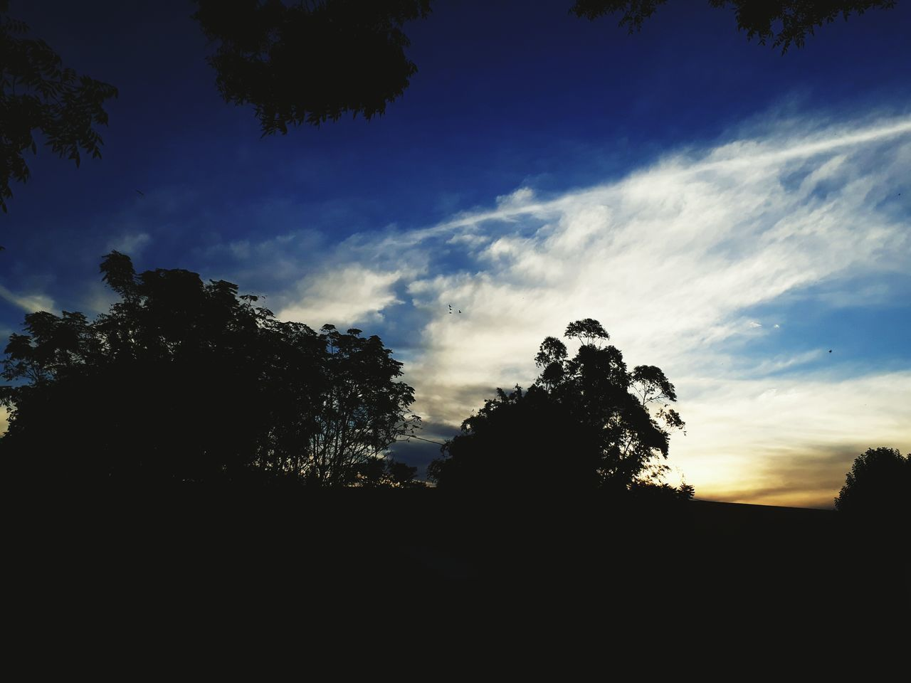 Tree Silhouette Sunset Nature Sky Igniting Social Issues No People Beauty In Nature Outdoors Natural Parkland