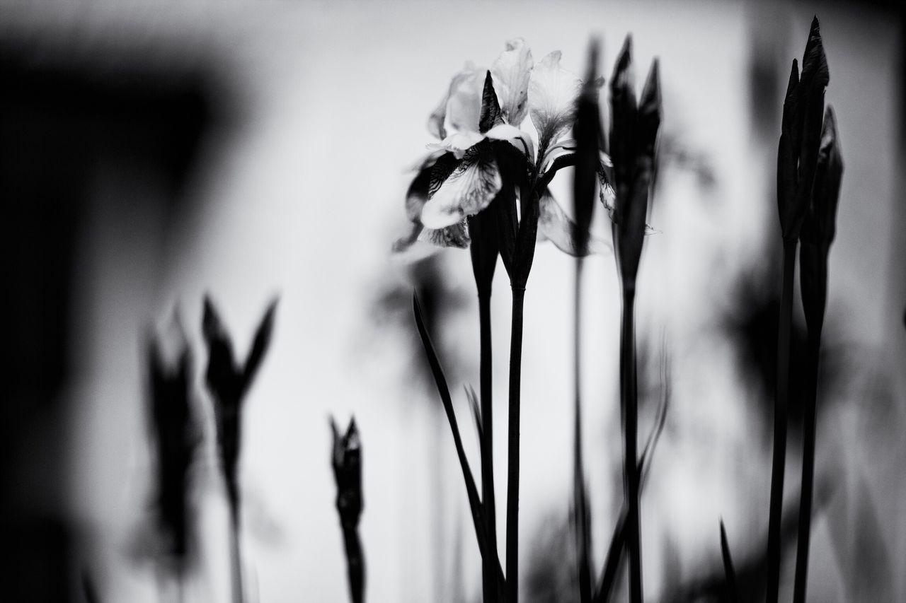 Some flowers Exceptional Photographs Tadaa Community Flowers Lilies Monochrome Blackandwhite EyeEm Nature Lover