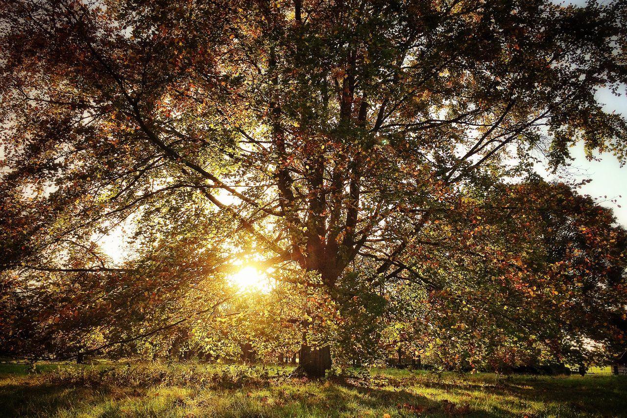 Autumn Trees Colors Of Autumn Sunrise