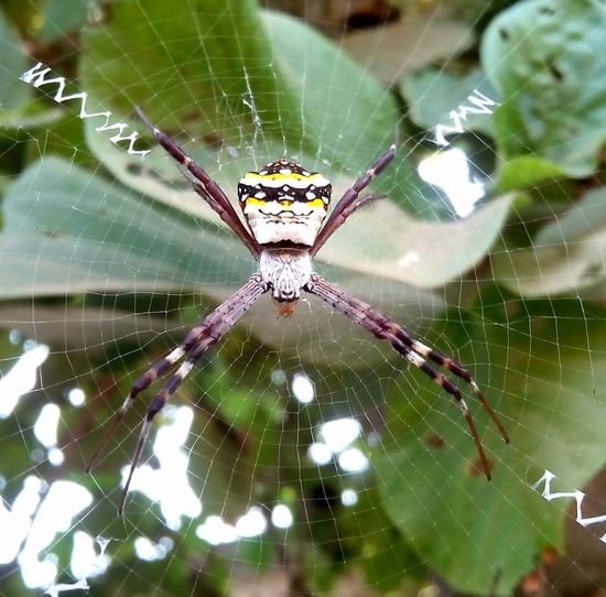 Spiderworld Wildlife & Nature First Eyeem Photo sk photography