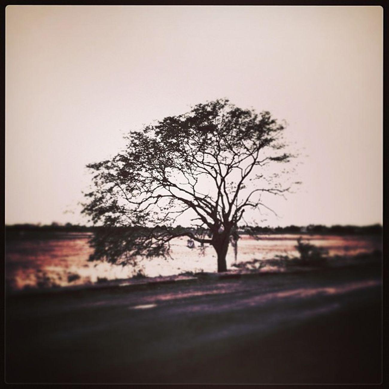 IPStree