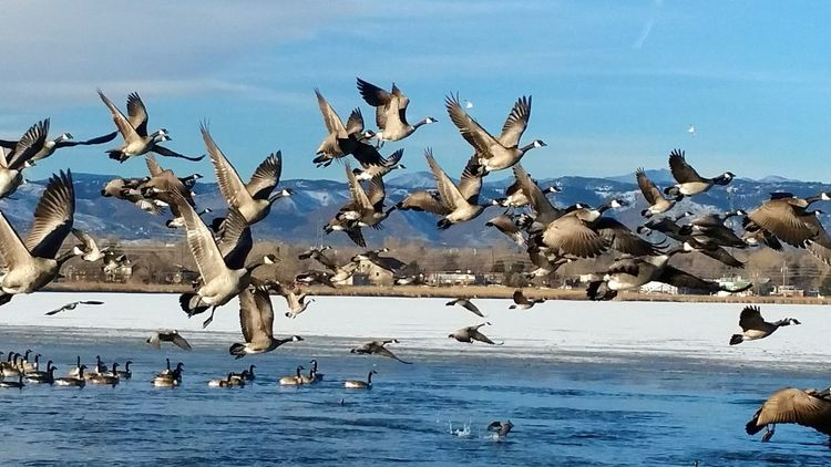 https://m.youtube.com/channel/UCfVhCnf4c53Stu8EN_0KZFw Waterfowl Sanctuary Samsung Galaxy Note 4 EyeEm Best Shots Awsome Denverphotographer Near And Far Sky_ Collection Skyporn Manmade Beautiful Canadian Geese Warning Sky_collection Canadian Goose Popular Denver Colorado  Nature Check This Out Hard To Get Hello World Waterfowl