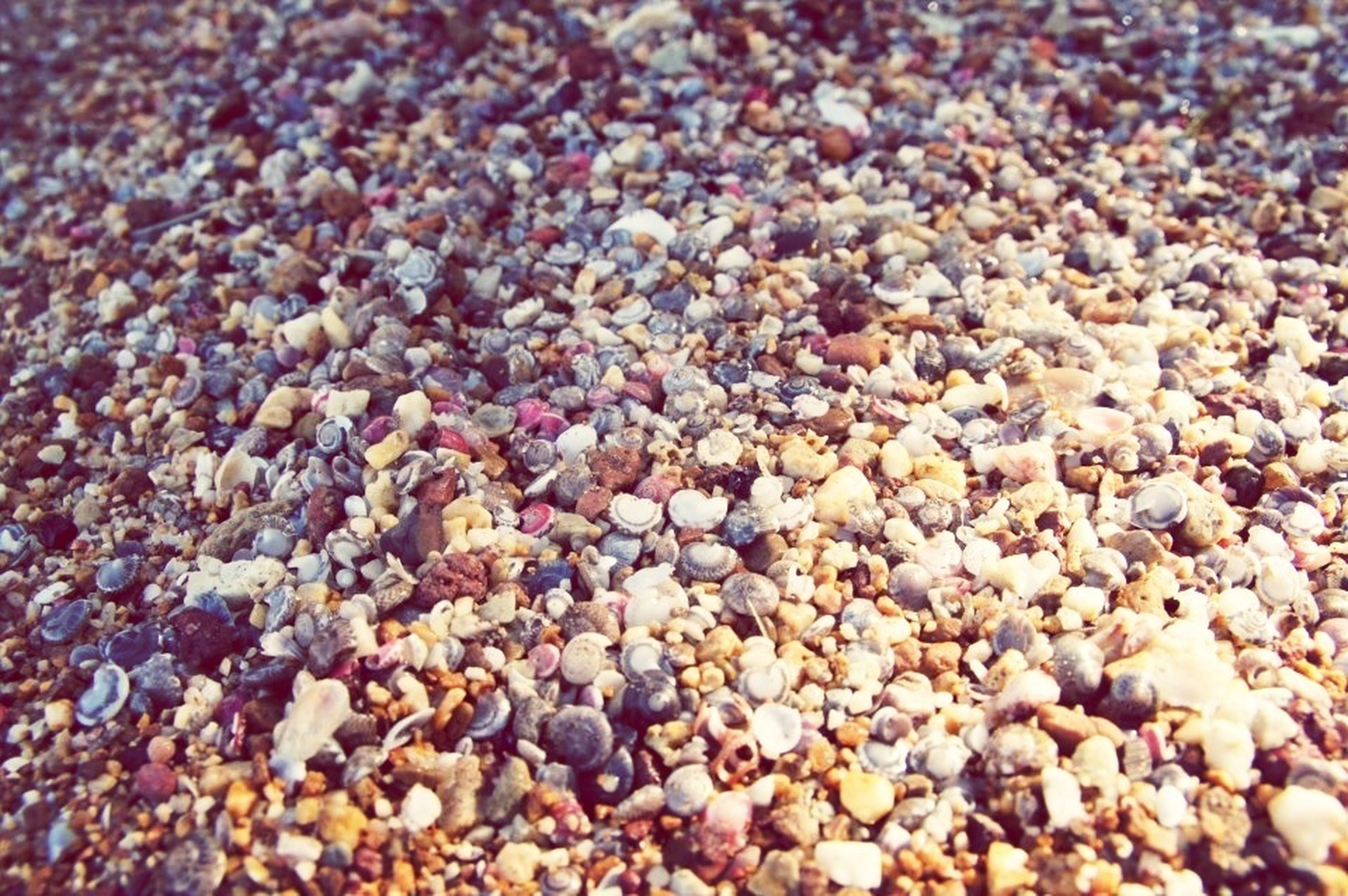 full frame, abundance, backgrounds, high angle view, pebble, beach, nature, stone - object, day, outdoors, large group of objects, sand, no people, selective focus, tranquility, close-up, beauty in nature, dry, textured, field