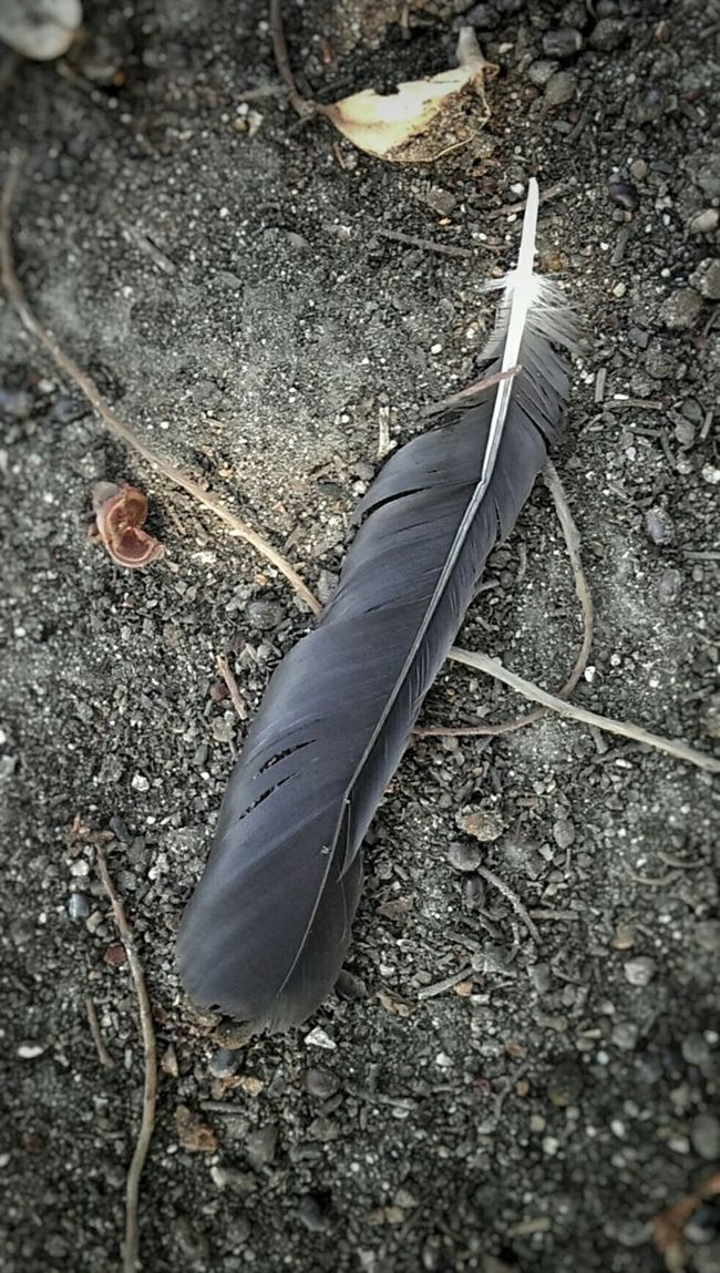 "..""flew too high and melted my wings"".. Feather"