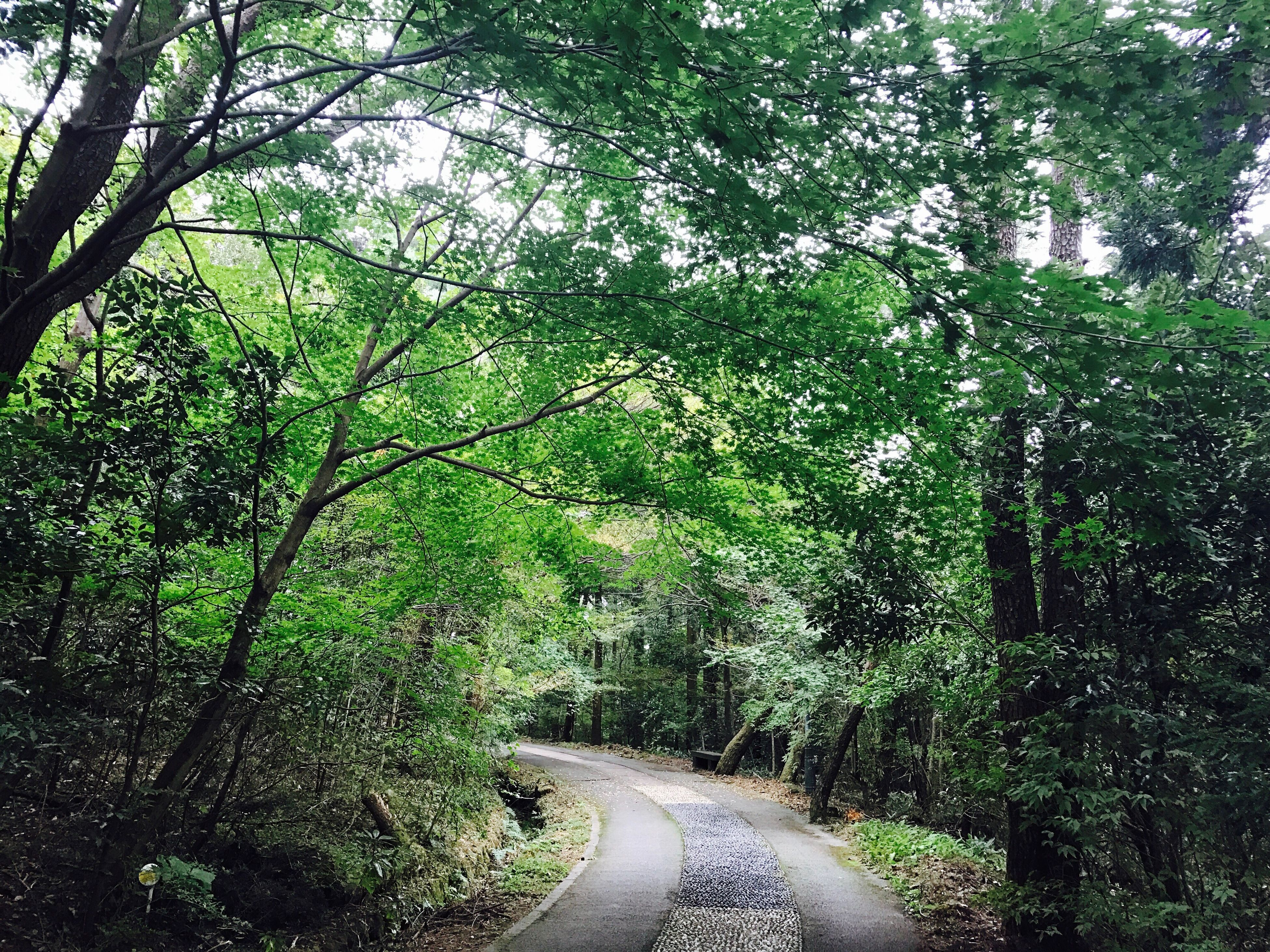 tree, the way forward, growth, tranquil scene, transportation, forest, tranquility, green color, road, scenics, plant, non-urban scene, nature, long, branch, green, beauty in nature, lush foliage, outdoors, curve, day, tourism, diminishing perspective, travel destinations, narrow, greenery, solitude, remote, woodland, vacations, single lane road