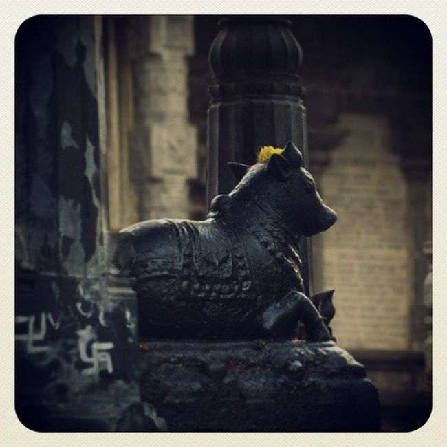 Temple Nandi Holy