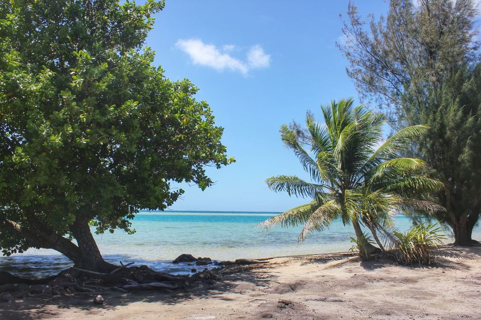 Beautiful stock photos of jamaica, Beach, Beauty In Nature, Day, No People