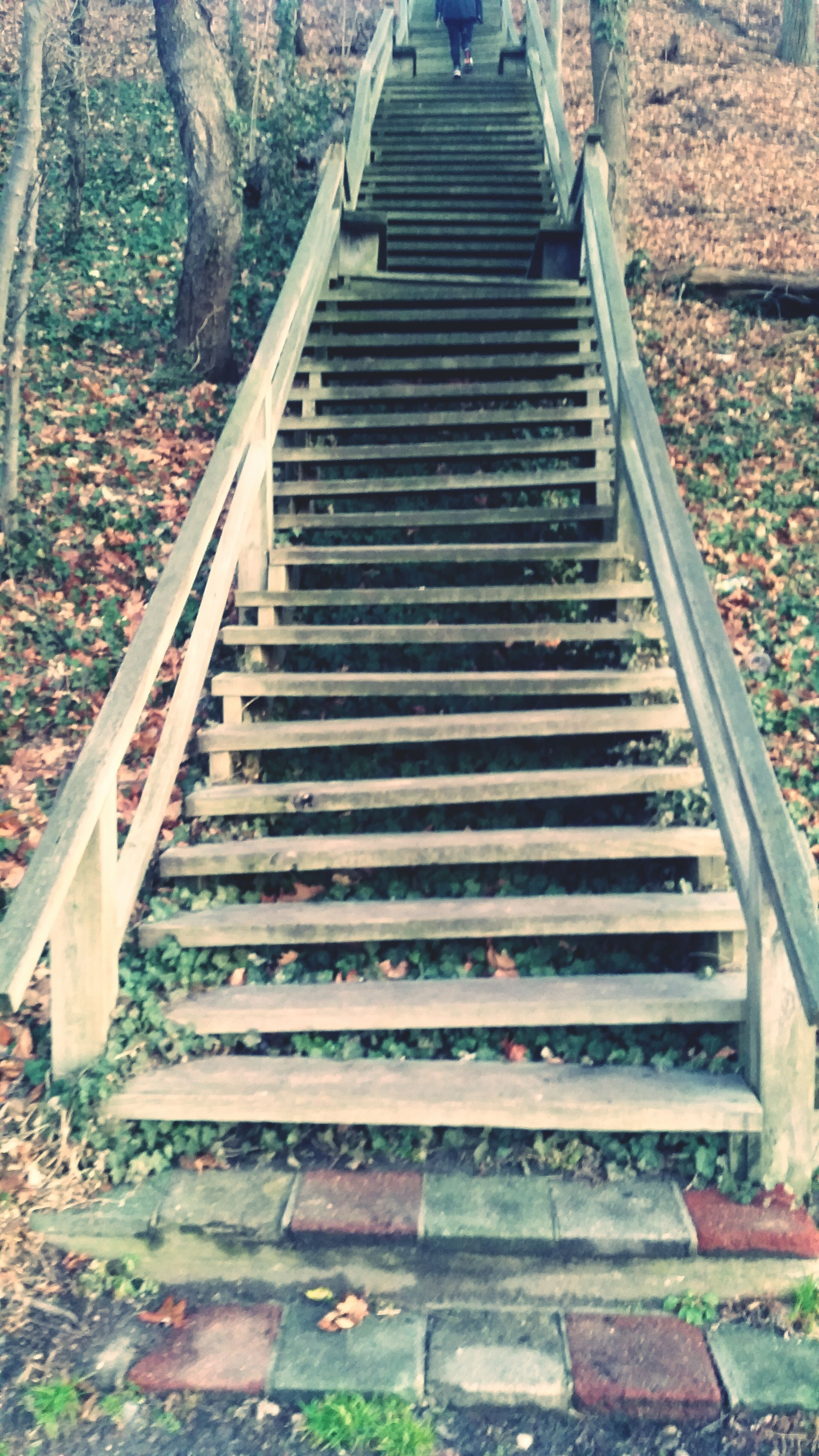 steps, the way forward, steps and staircases, staircase, diminishing perspective, railing, day, stairs, outdoors, vanishing point, high angle view, wood - material, built structure, tree, nature, no people, plant, sunlight, architecture