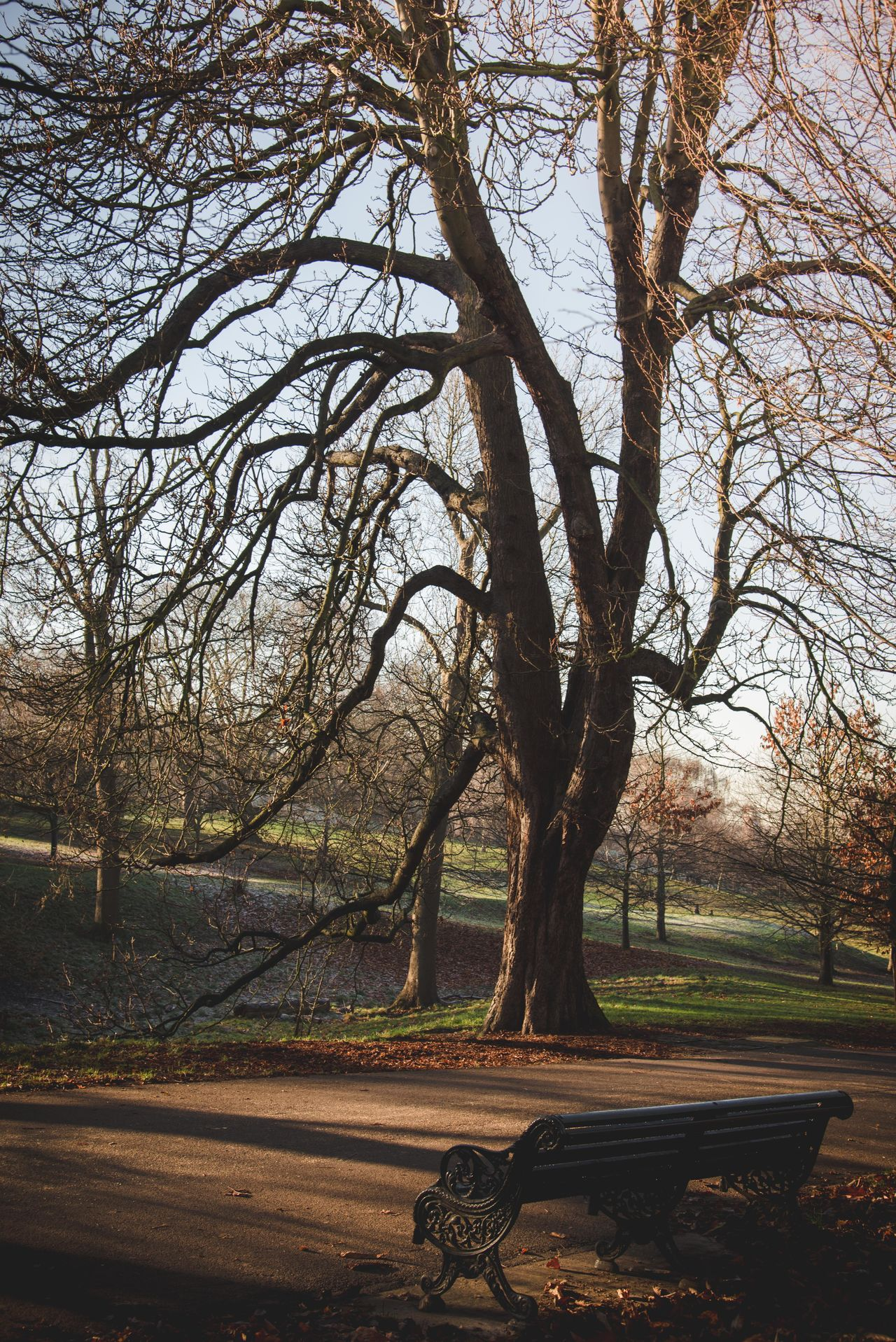 Greenwich Park Bare Tree Beauty In Nature Branch Day Greenwich Park Landscape London Parks Nature No People Outdoors Scenics Sky Tranquil Scene Tranquility Tree Tree Trunk