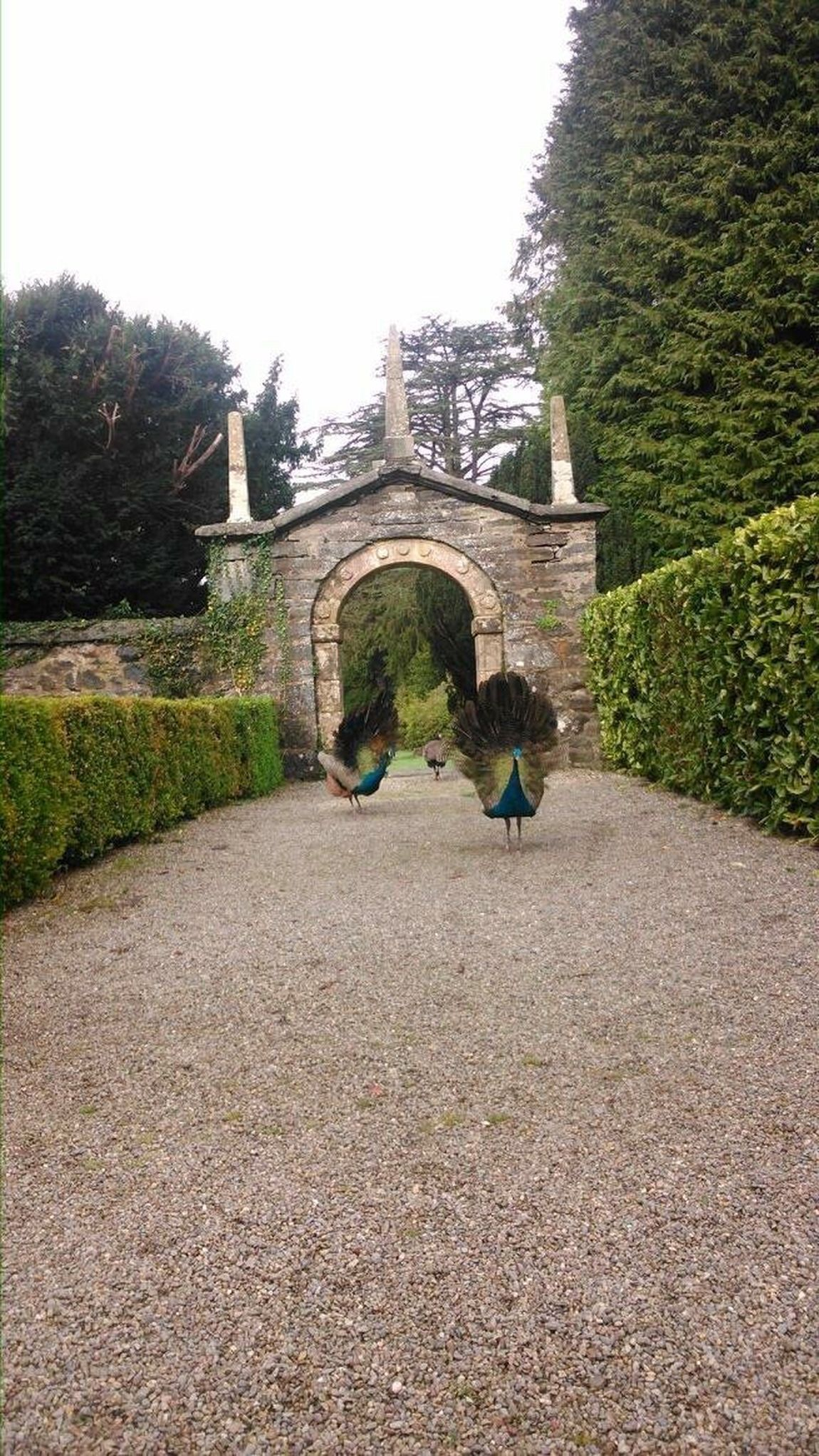 The Haunted Castle Peacocks Peacock Nature Peacock Nature On Your Doorstep The Castle Grounds Landscapes Landscape