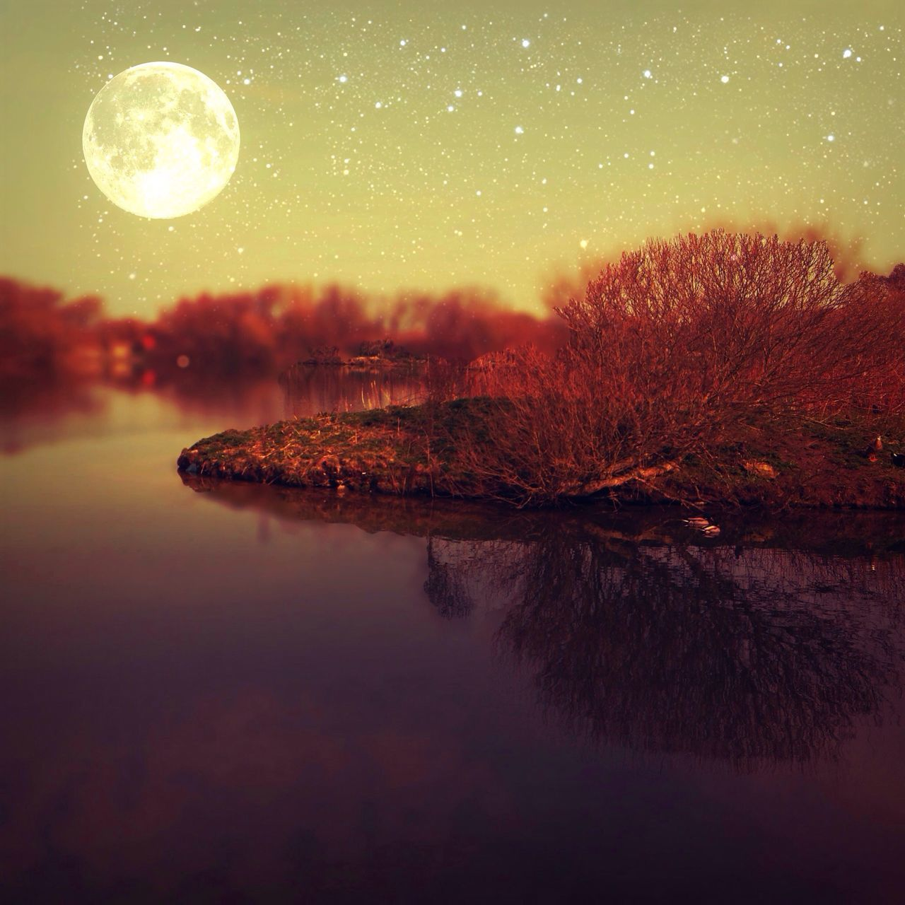 Beautiful stock photos of magic, Astronomy, Auto Post Production Filter, Beauty In Nature, Bush