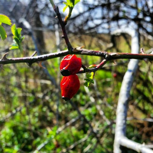 Focued Blured Moments Natural Fruits Flowering Bushes In Seaaon Getting Inspired Projecting