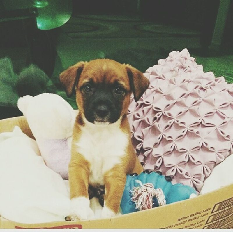 New dogfor my brother 😊i like it😊😊