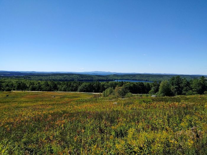 Deer Isle Landscape Tranquil Scene Scenics Maine Field Beauty In Nature Growth Nature Outdoors No People Day Idyllic