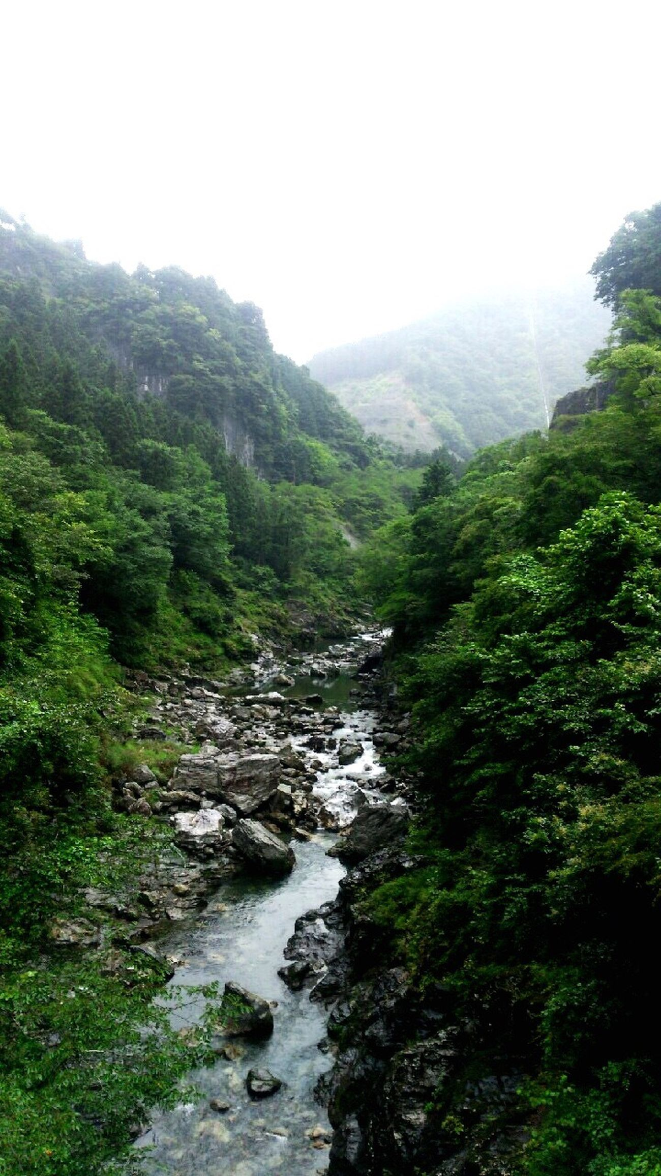 絶景 風景 River Forest Japan Chichibu 秩父 埼玉 EyeEm Gallery EyeEm Nature Lover EyeEm EyeEm Best Shots Clear Stream Charcoal Landscape Mystery Superb View Of Japan Superb View 川 Enjoying Life Happy Enjoy