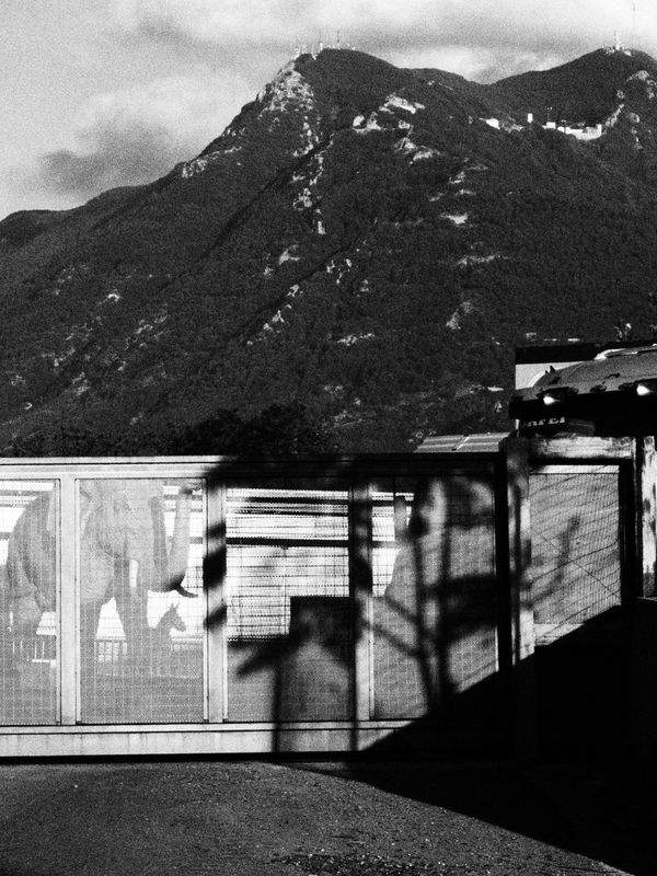Avellino 2016 - © Costangelo Pacilio For more galleries www.costangelo.com About section for publications, links to them and contacts. COSTANGELOP-->FB/TWITTER/INSTAGRAM Antenna Avellino Black And White Circo Avellino Circus Clouds Costangelo Geometry Immensity Imponente Italy Madonna Madonnafans Massive Montevergine Mountain Pachiderma People And Places Shadow Shape Sky Sud Italia Tree Triangle Zebra