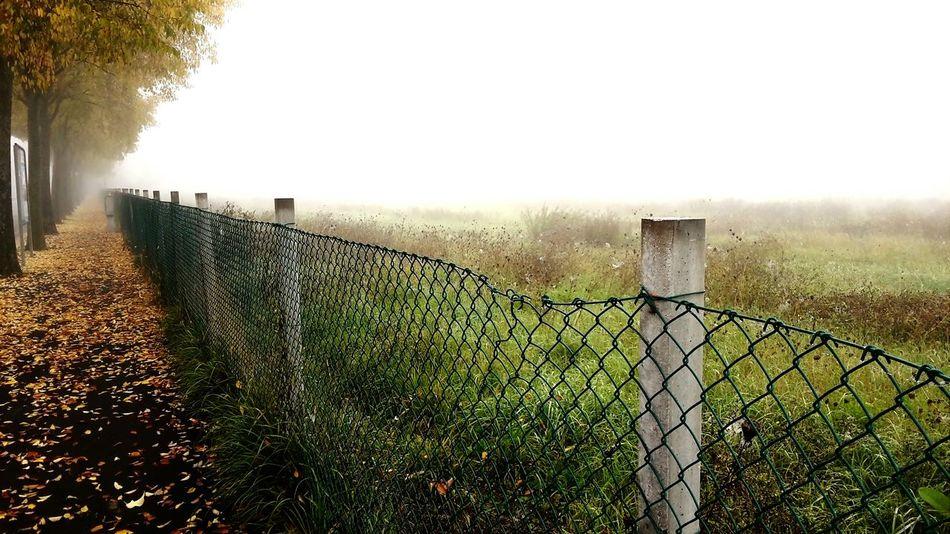 Foggy Morning Nebbia Rimini Wintertime Autumn🍁🍁🍁 Inverno Malinchonic Landscape Life Colors Of Autumn Acid