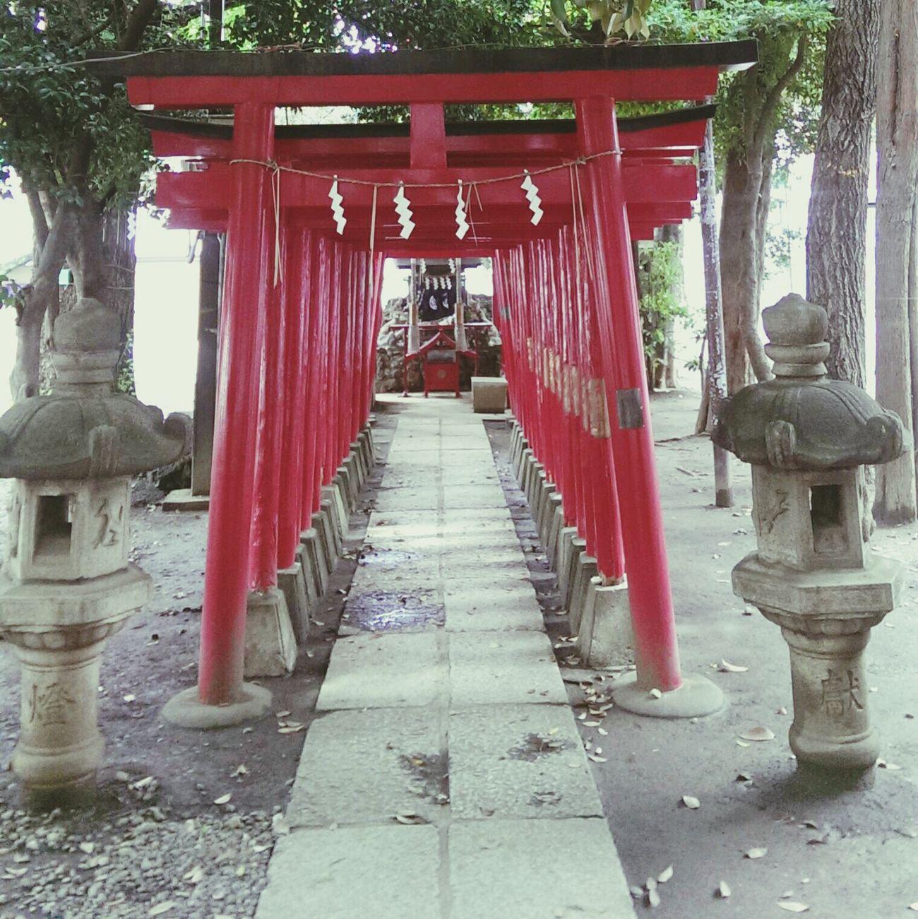 花園神社 EyeEm Japan Photo Shinjuku Tokyo Japan 花園神社 Travel Photography