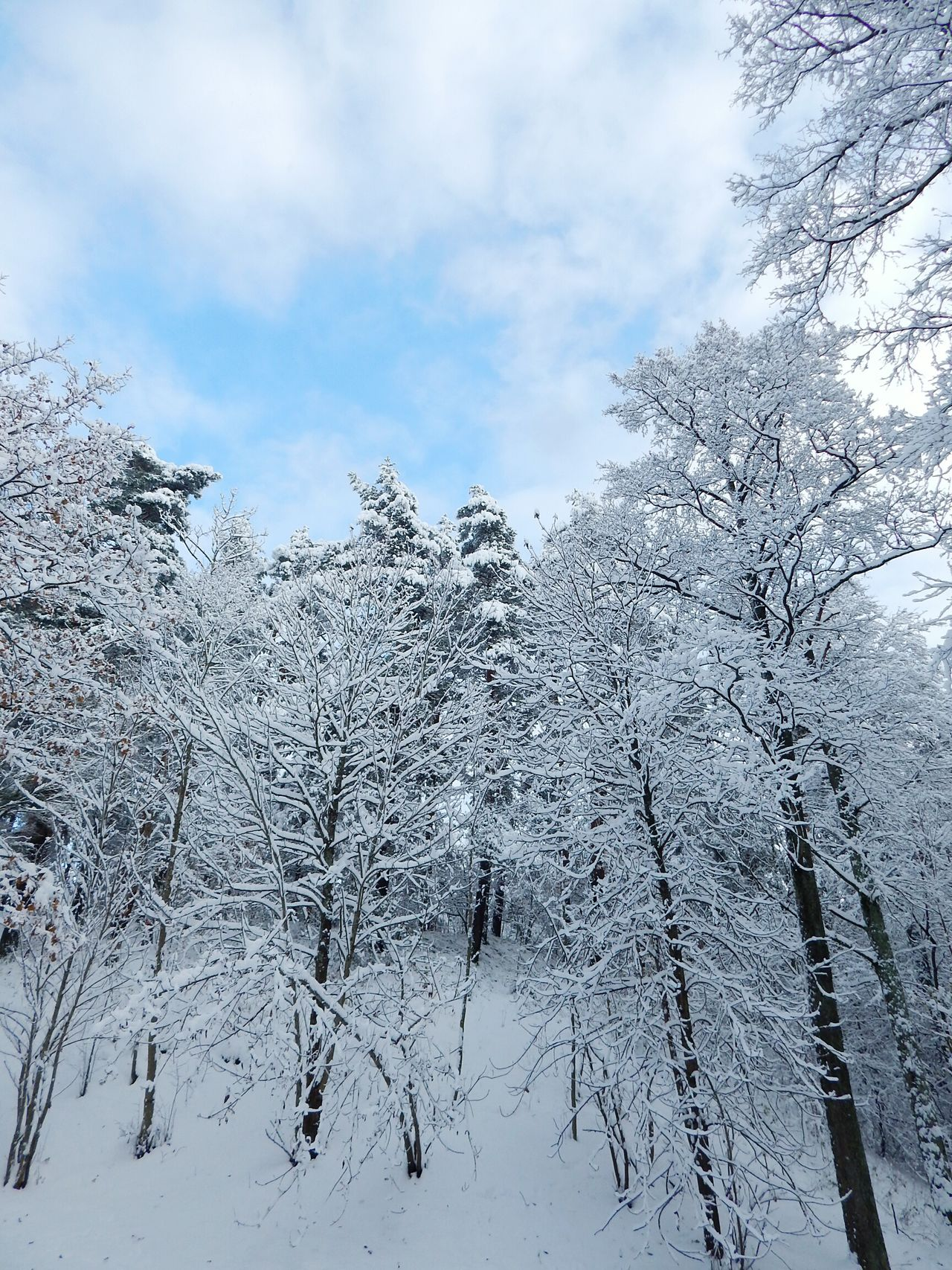 Nature Sky Cloud - Sky Tree No People Beauty In Nature Outdoors Day Close-up Winter Forest Latvia Riga Snow Non-urban Scene Backgrounds Bare Tree Beauty In Nature Nature