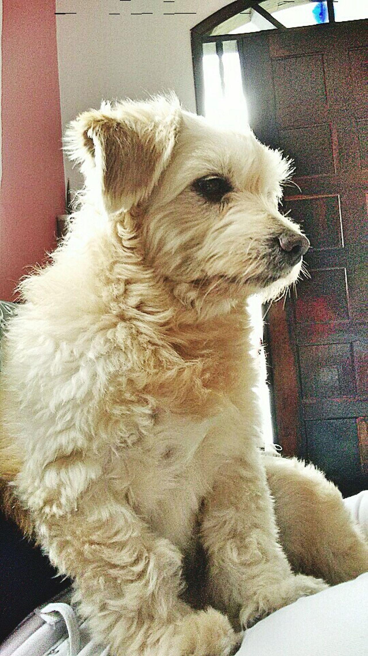 Meu modelo 🐕😍👏 Dog Life ModeloEspecial Biscoitotopmodel Dog❤