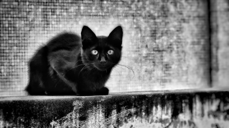 Animal Themes Black Cat Bnw Bw Cat Close-up Day Domestic Animals Domestic Cat Feline Looking At Camera Mammal Monochrome No People Noir One Animal Outdoors Pets Portrait Scary Street Cat Streetphotography