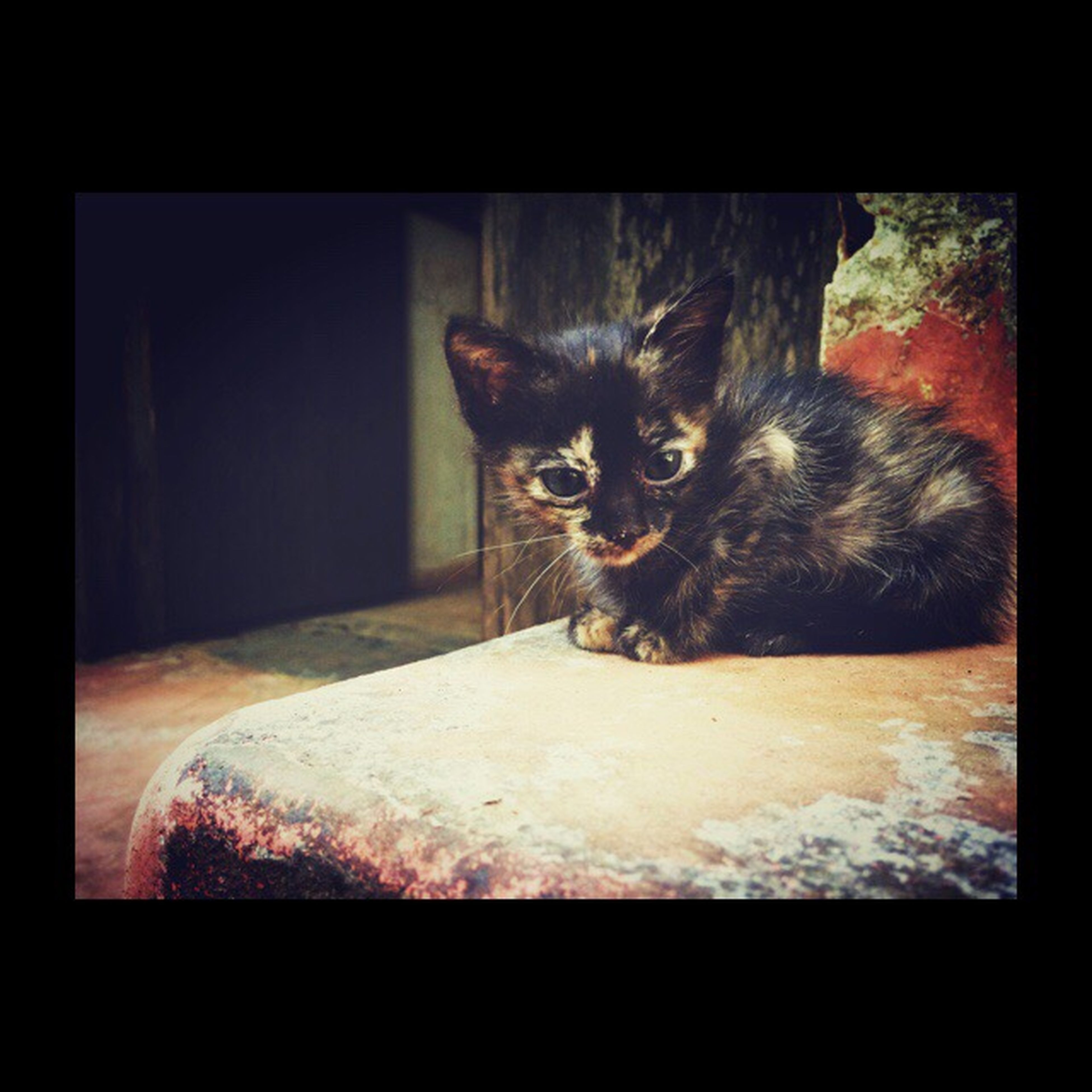 domestic cat, animal themes, pets, domestic animals, one animal, mammal, no people, indoors, feline, day