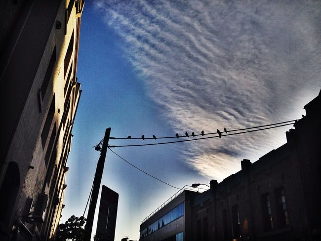 Bird on a Wire Taking Photos Enjoying Life Morning Birds Urban Geometry Streetphotography Look Up And Thrive Nature Urban Landscape Check This Out