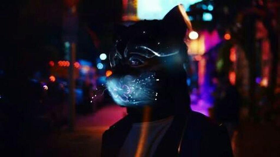 Nith Photography Galantis Music Cat