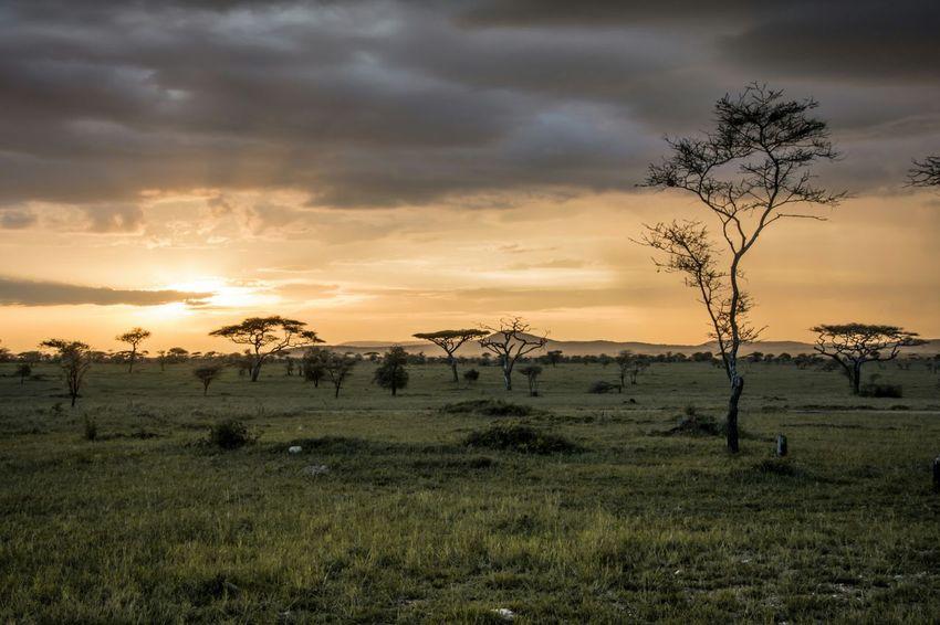 Serengeti at Dusk - Tanzania, Africa Taking Photos Enjoying Life Check This Out Travel Photography Travel Tanzania Africa Landscape Hello World Safari The Week On EyeEm