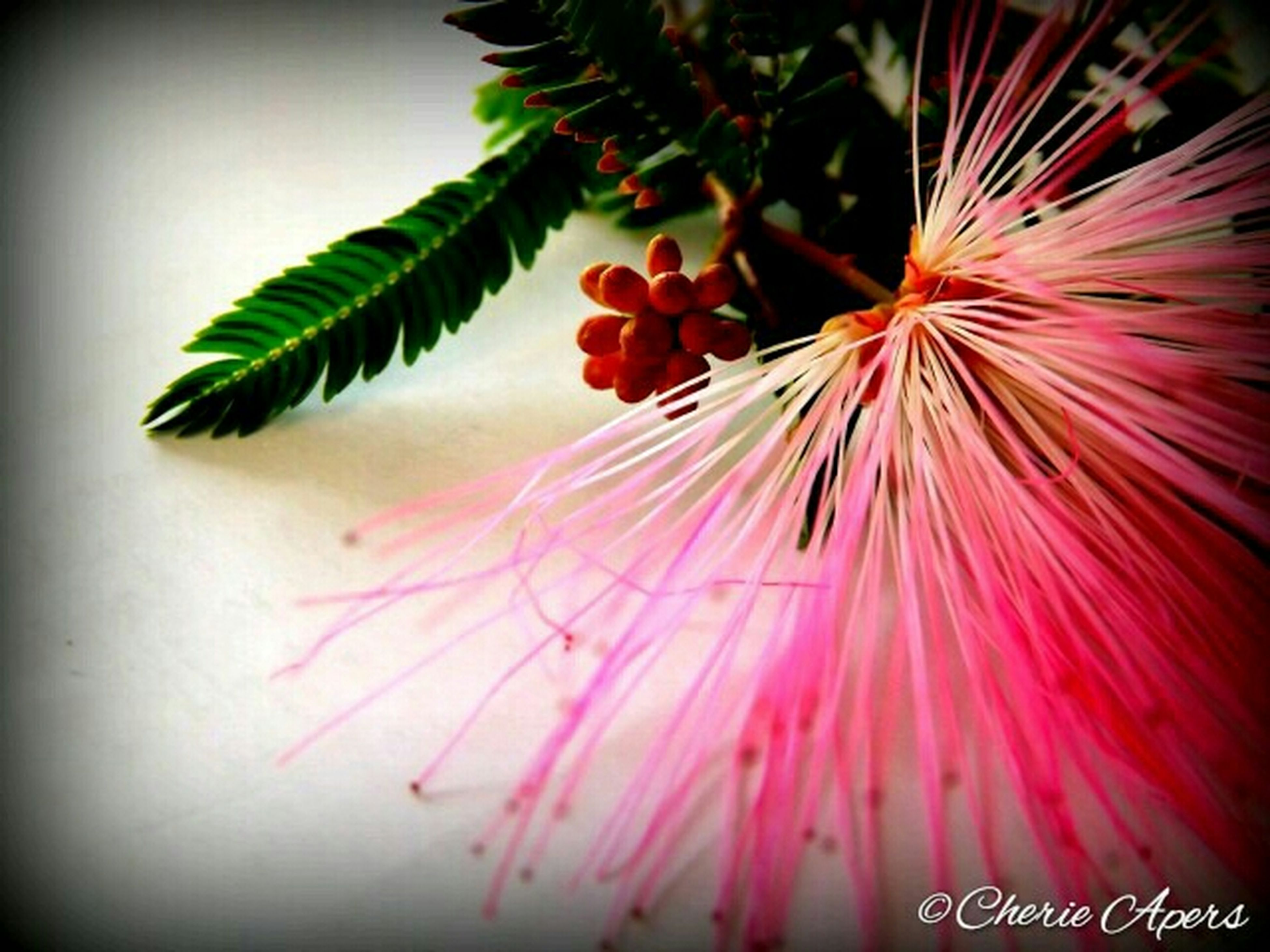 flower, growth, close-up, auto post production filter, red, plant, transfer print, freshness, nature, leaf, fragility, low angle view, clear sky, beauty in nature, pink color, focus on foreground, no people, day, outdoors, selective focus