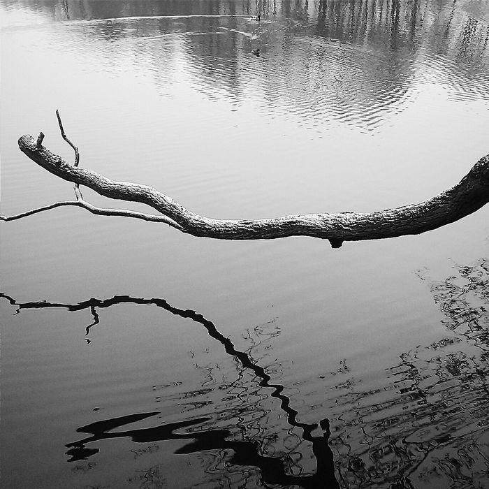 Vscocam Mobilephotography Blackandwhite Black & White